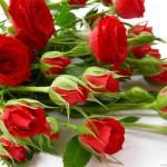Quando si regalano i fiori?