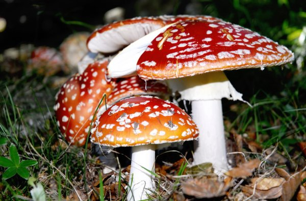 Trattamento di un fungo di gambe nazionali