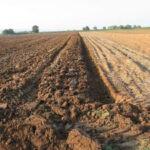 Quando è il periodo giusto per lavorare il terreno?