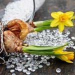 Quando piantare i bulbi: calendario mese per mese.