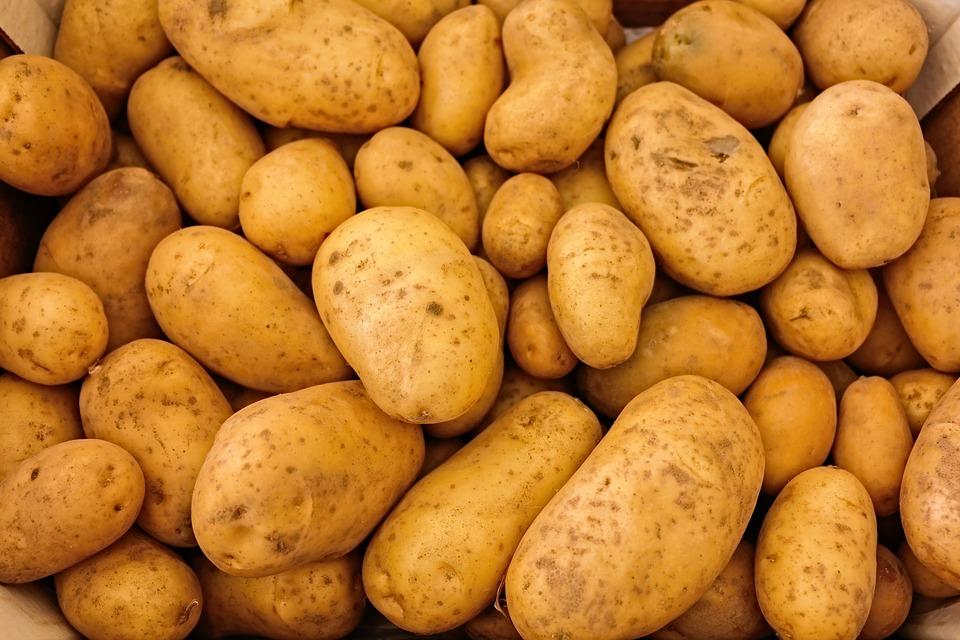 Quando seminare le patate