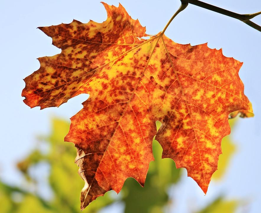 Quando arriva l'autunno?