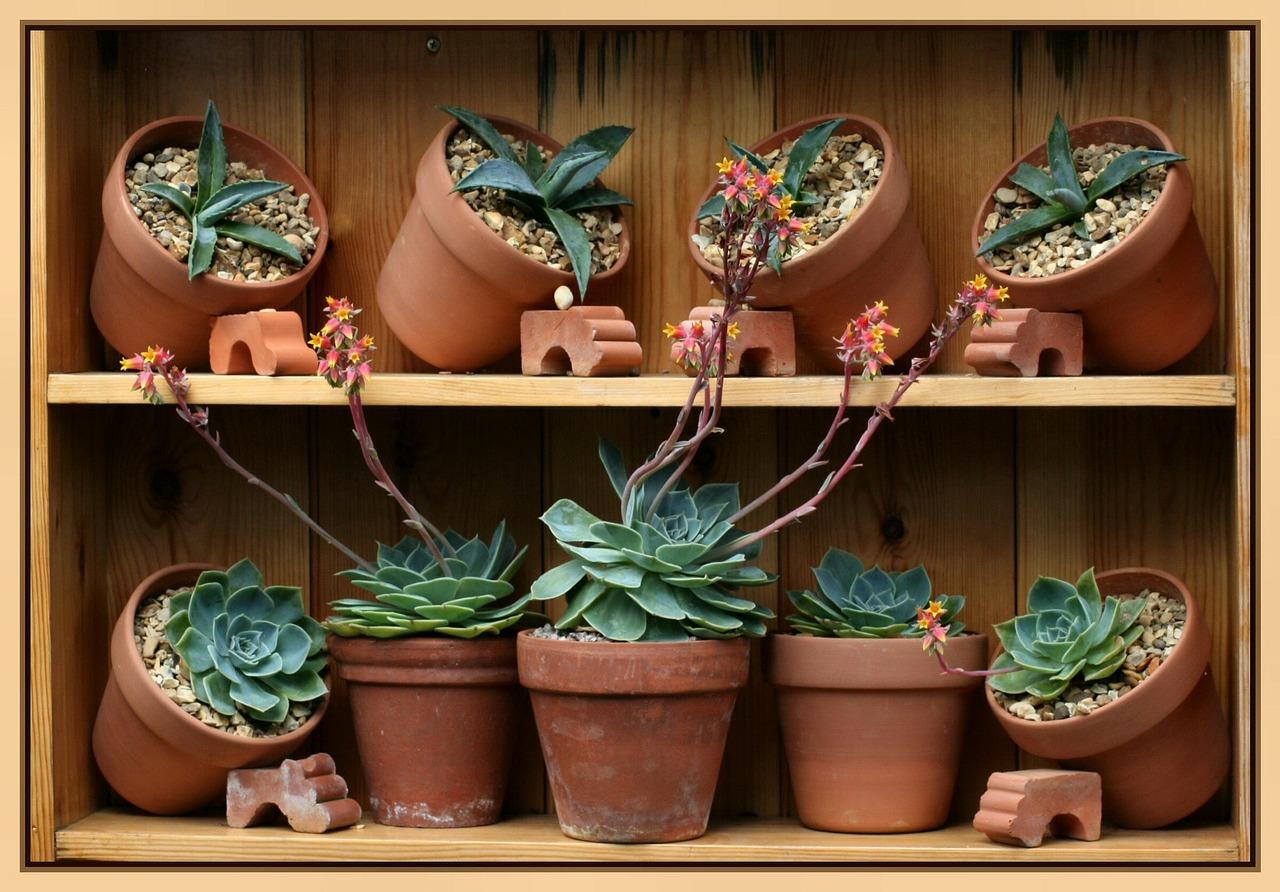 Quando rinvasare le piante